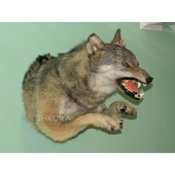 Чучело волка