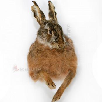 Чучело зайца 01