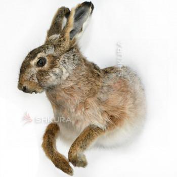 Чучело зайца 02