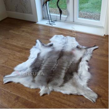 Шкура финского оленя 03