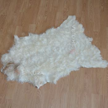 Шкура козы Ангорской породы 05